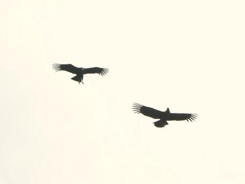 Se conmemora el día mundial del ave migratoria