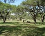 Se aproxima La Brama 2010 en la Reserva Natural Parque Luro