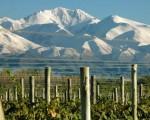 La provincia de Mendoza ofrece buenos vinos, belleza natural y cultura