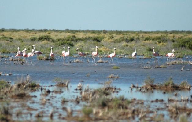 Las Lagunas de Guanacache en San Luis