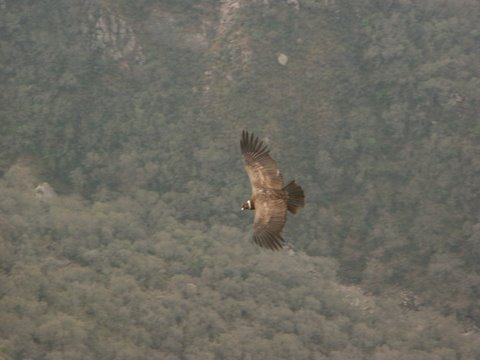 El vuelo del Cóndor en la provincia de La Rioja