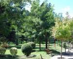 En San Luis se plantan nueve árboles por cada habitante