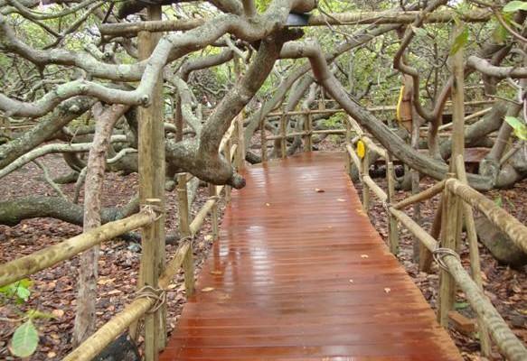 El anacardo del noreste de Brasil atrae a turistas a Parnamirim