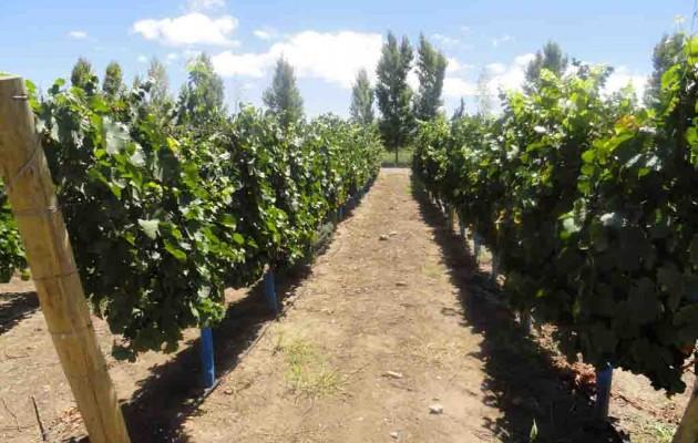 La Fiesta del Sol 2012 y el vino argentino como bebida nacional