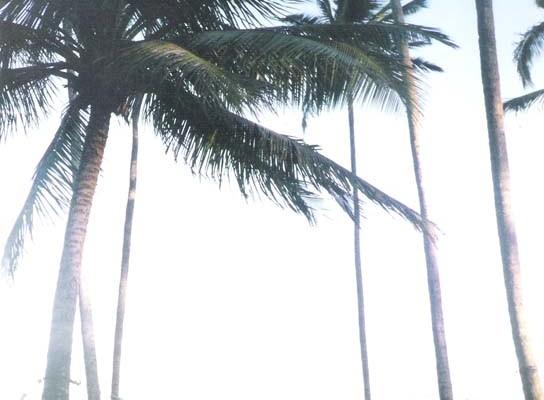 Salvador de Bahía tiene un centro histórico declarado patrimonio cultural