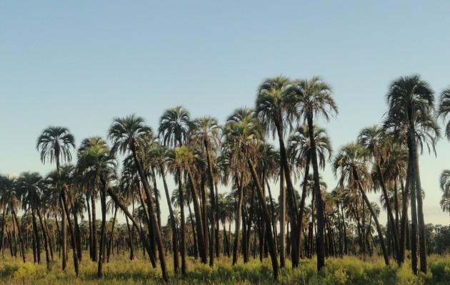 En el Parque Nacional El Palmar, se observan las aves en senderos y miradores