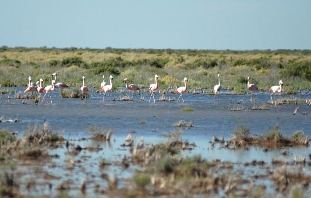 Las Lagunas de Guanacache fueron el último asentamiento de Los Huarpes