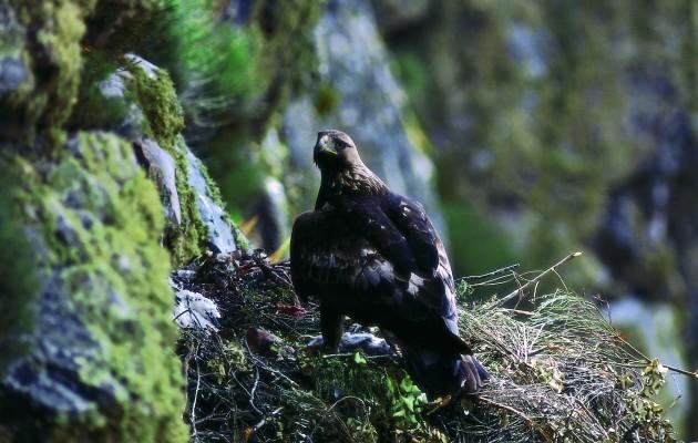 España, un lugar de encuentro para los amantes y observadores de los pájaros