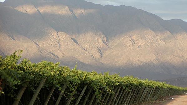 La bodega Valle de la Puerta celebra el mes del Torrontés