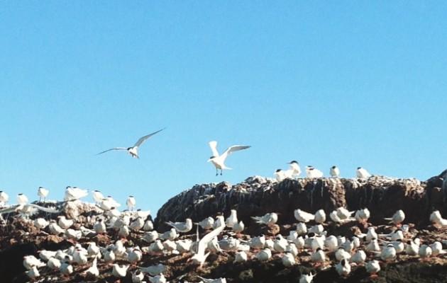 Los pingüinos de penacho amarillo atraen a los turistas en Puerto Deseado