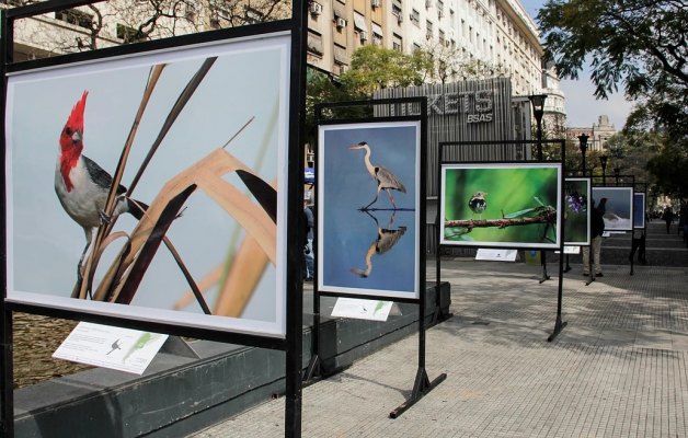 """La muestra fotográfica """"Aves de la Argentina"""" llega a Concordia"""