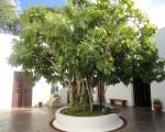 La casa natal de Sarmiento cuenta la historia del prócer sanjuanino