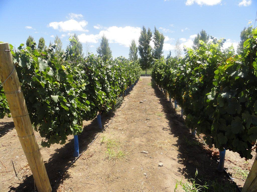 San Juan, la tierra del buen vino y la gastronomía