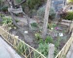 La Feria de la Huerta Orgánica se realizará en la Casa Natal de Domingo Faustino Sarmiento