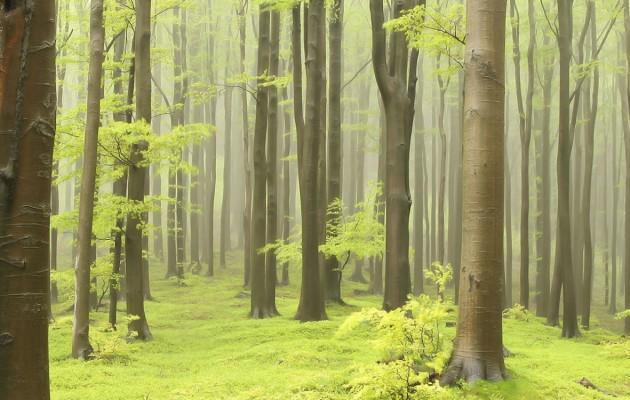 La Cumbre del Clima COP25 de Madrid: los problemas ambientales también están en nuestras manos