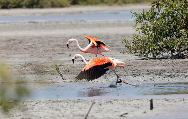 Piura y Tumbes, dos destinos del norte de Perú que seducen por sus playas y paisajes